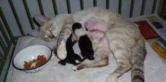 castración de mascotas