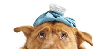 ¿Por qué vomita mi perro?