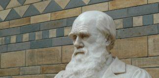 evidencias teoría de la evolución