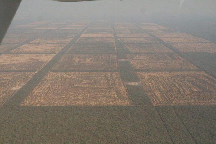 deforestación en paraguay