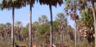 biodiversidad del gran chaco