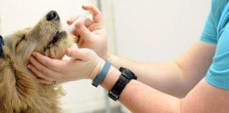 quimioterapia en mascotas