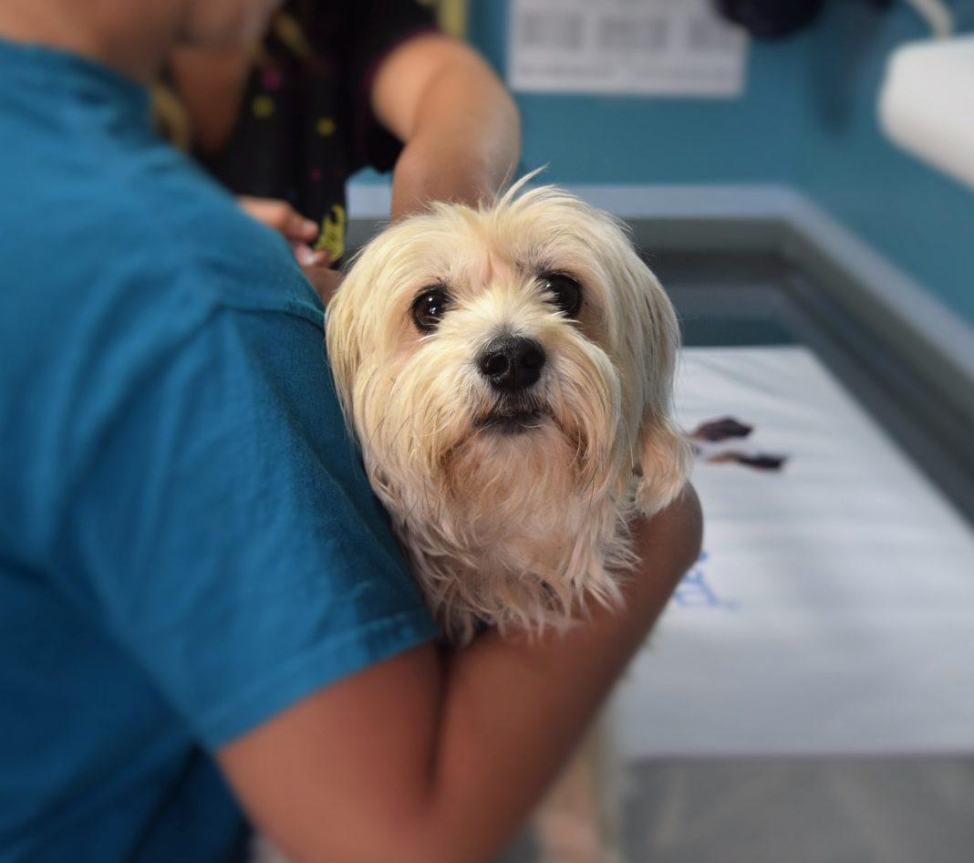 investigar cáncer mascotas