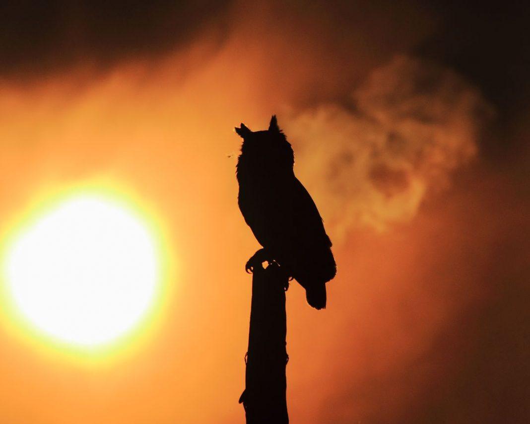 aves de paraguay