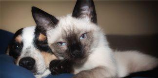 cuidados perros y gatos