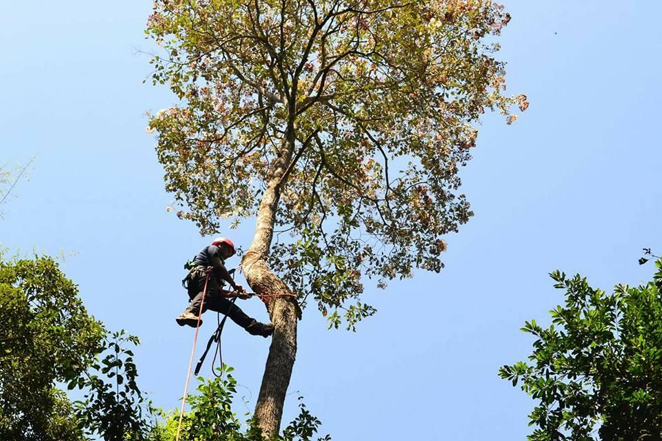 recursos genéticos forestales paraguay