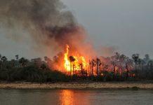 pantanal paraguayo fotos